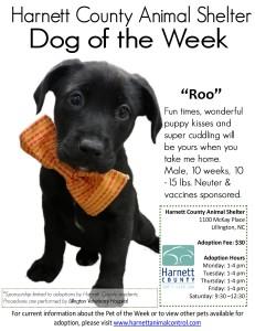 Roo flyer - online